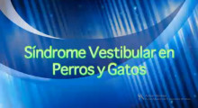 "Video ""Síndrome Vestibular en perros y gatos"""
